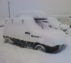 雪シスレー.jpg